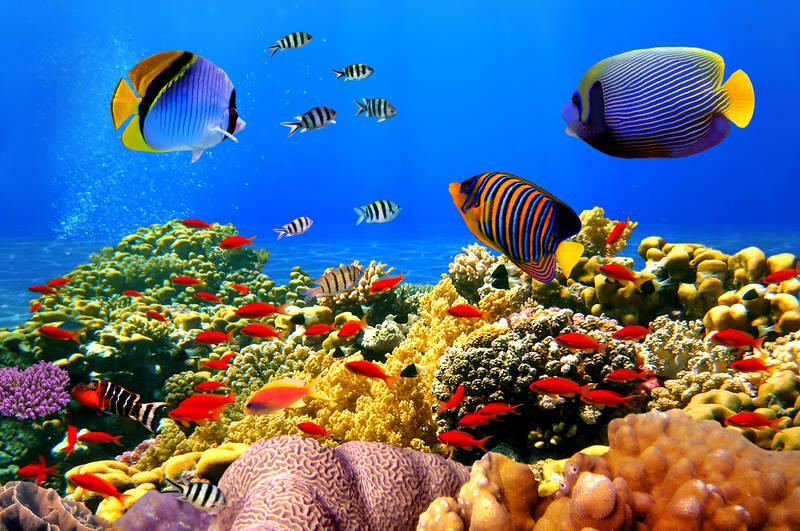 des poissons très heureux