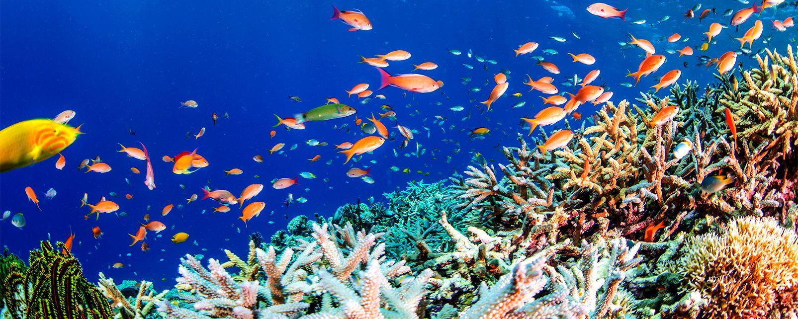 Les fonds marins et les animaux qui y vivent