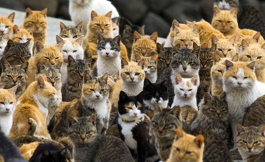 Les îles aux chats au Japon, un paradis félin