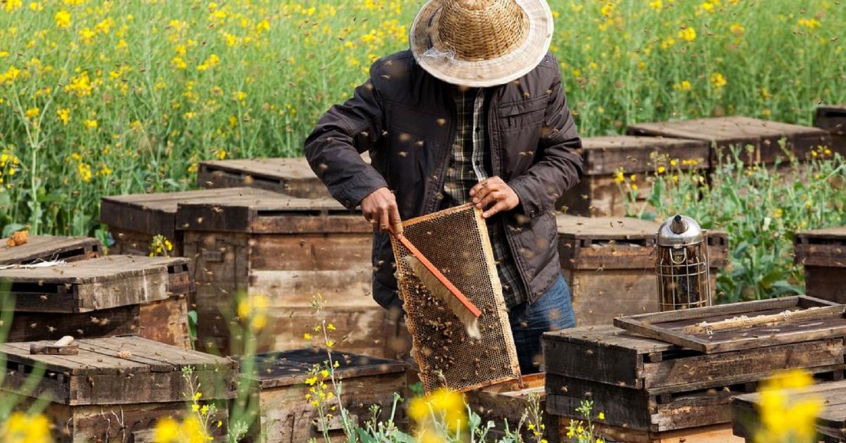 Les abeilles de Cuba sont en bonne santé