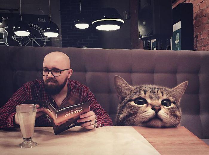 Des chats géants envahissent le monde