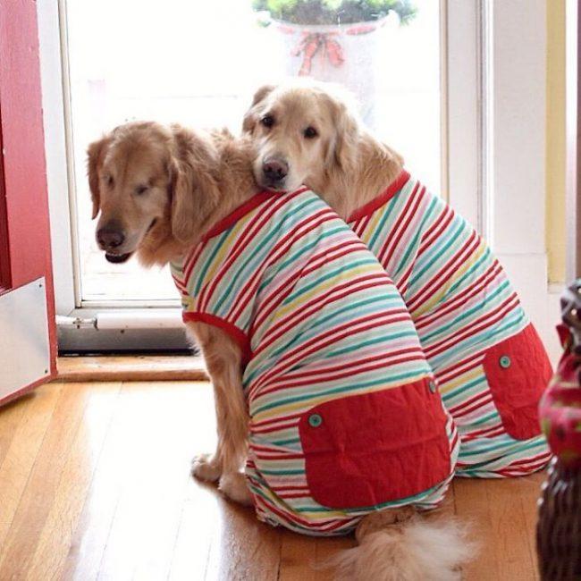 Deux chiens amis et complices