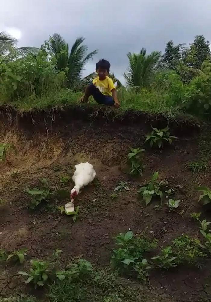 Un canard récupère une sandale