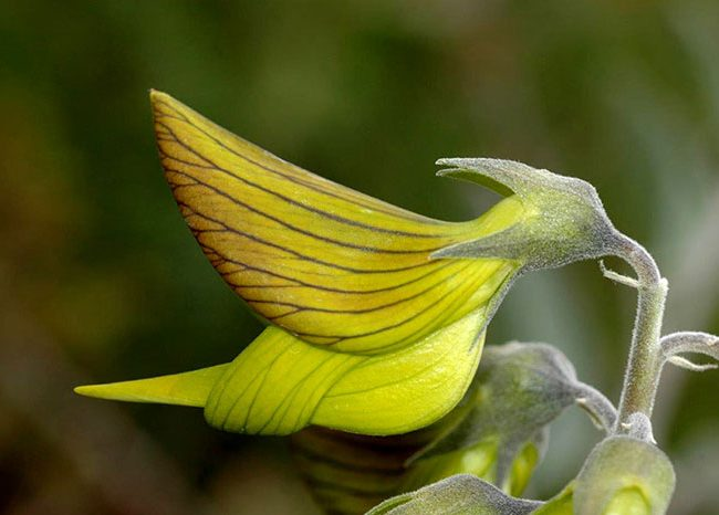 Une fleur ressemble au colibri