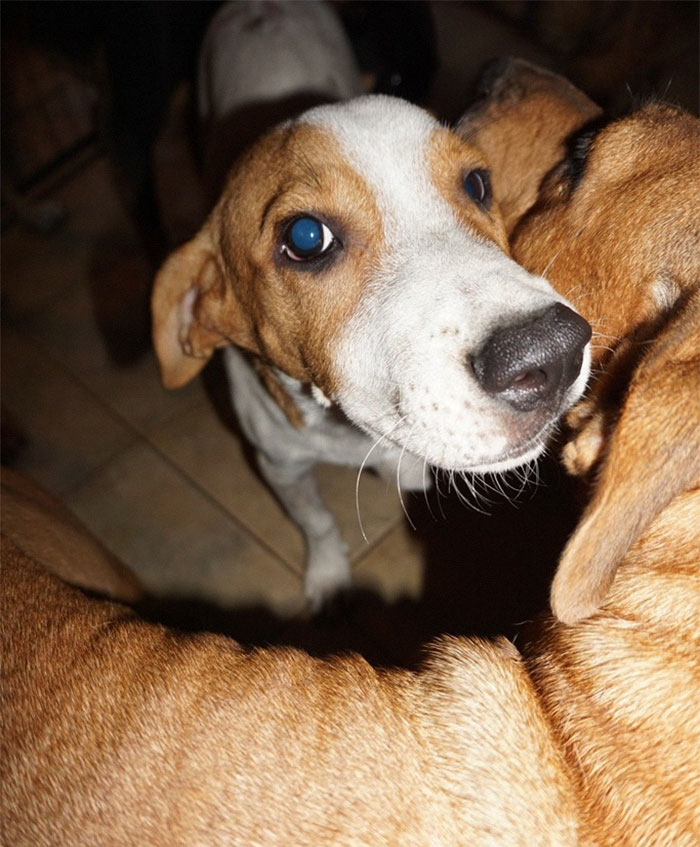 Des chiens errants à l'abri de l'ouragan Dorian
