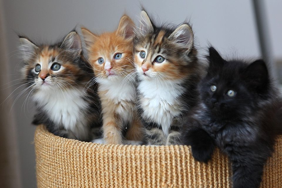 Des chatons incroyables
