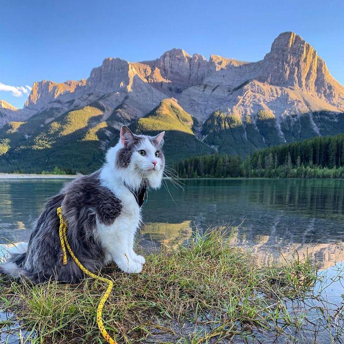 Les aventures de Gary, le chat le plus heureux au monde