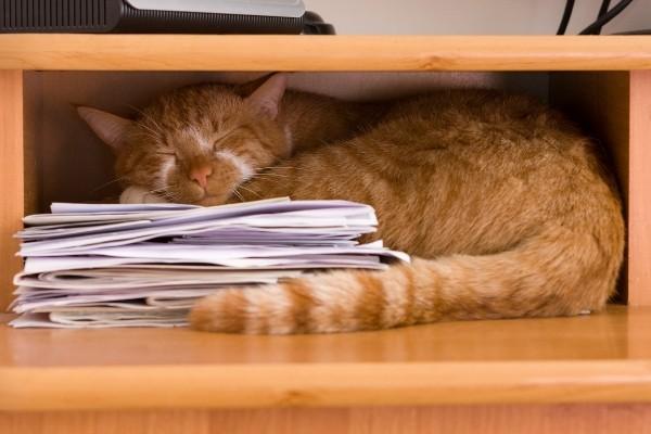 Les chats adorent dormir, même sans confort!