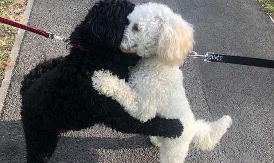 La rencontre de deux chiens après des mois de séparation