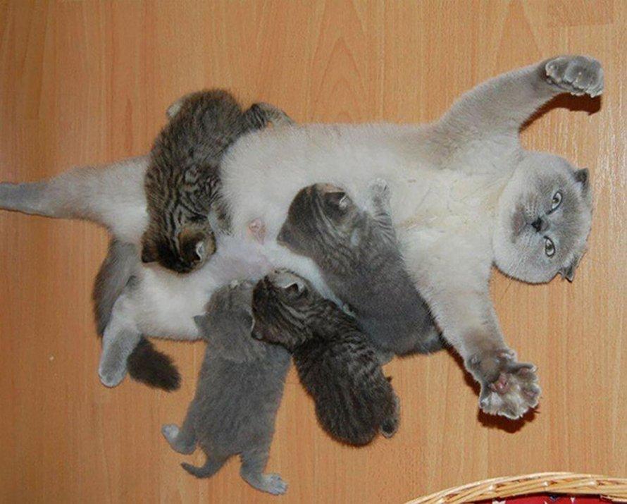 Les animaux et leurs petits de jolies familles