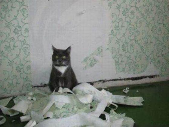 Un chat retourne toujours chez lui (blague)