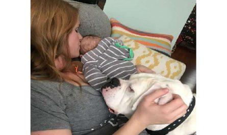 Un bébé et son chien sont de vrais amis