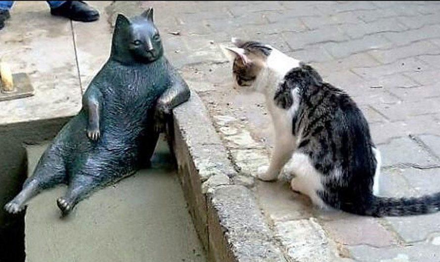 Tombili le chat star d'Istanbul en Turquie, une légende