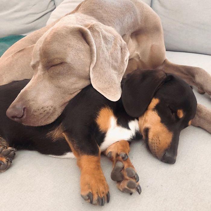 Un chien de thérapie pour un chien