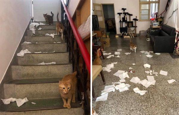 Des chats espions grâce à un plafond en verre