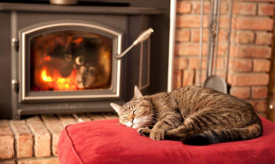 Le froid et les animaux de compagnie, conseils