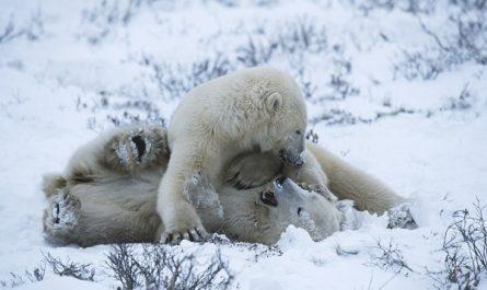 Les animaux dans la neige, des photos trop belles!