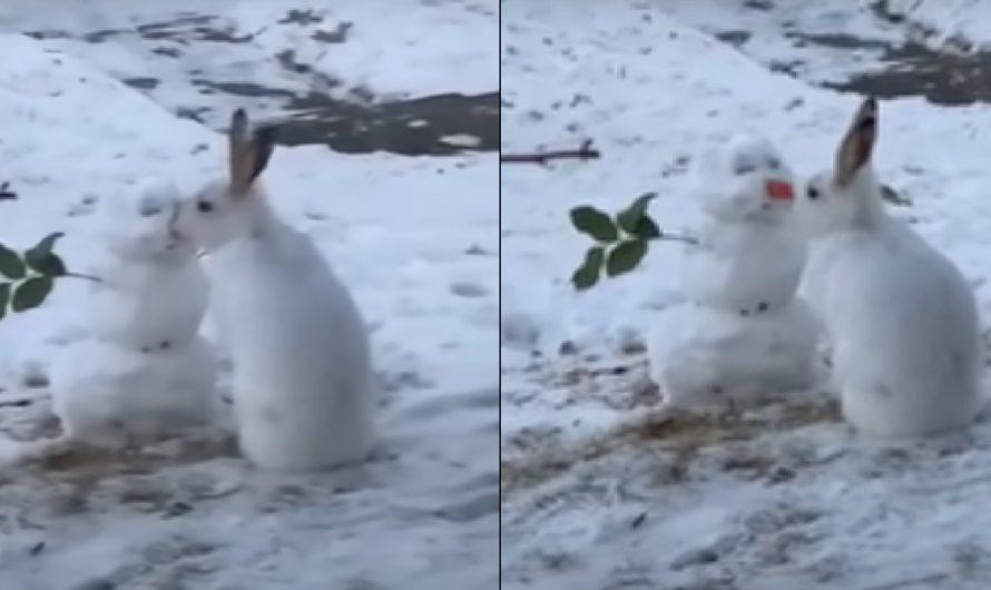 Un bonhomme de neige et un lapin affamé!( vidéo)