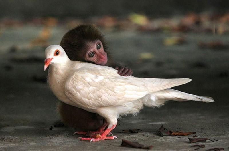 Drôle de relation entre des animaux et des humains